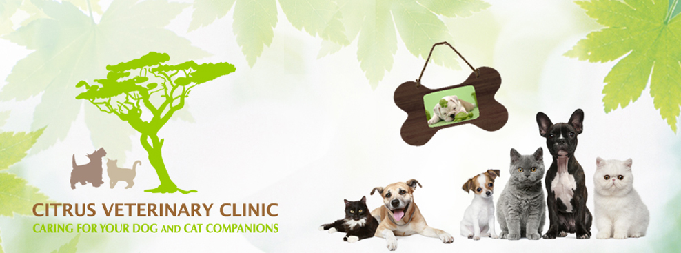 Citrus Veterinary Clinic - La Verne, CA -  (909)596-1881